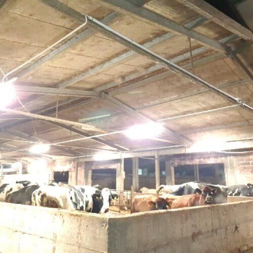 Efficientamento illuminazione azienda agricola